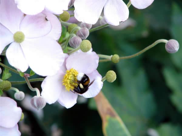 Bąk w ogrodzie botanicznym