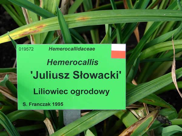 Słowacki w ogrodzie botanicznym