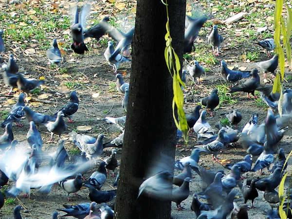 Lot nad kukułczym gniazdem