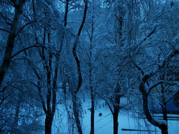 Zdjęcie - Zimowy poranek