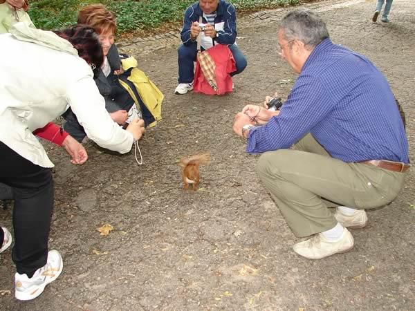 Wiewiórka i Włosi