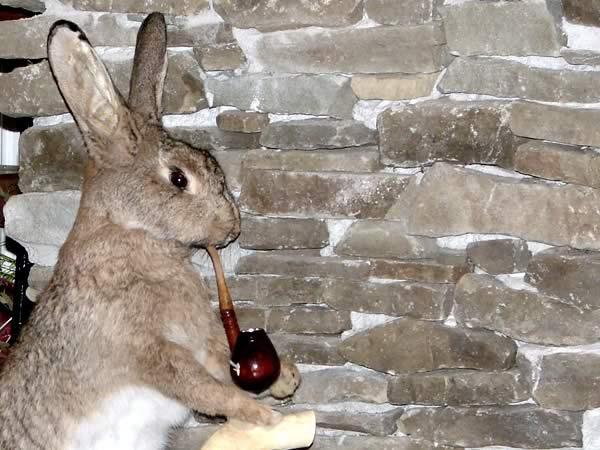 Opowiem Ci bajkę, jak zając palił fajkę