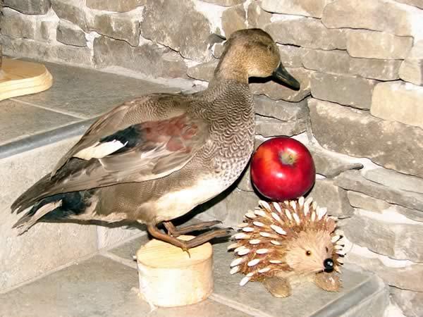 Coś czuję, że ta kaczka pragnie tego jabłka