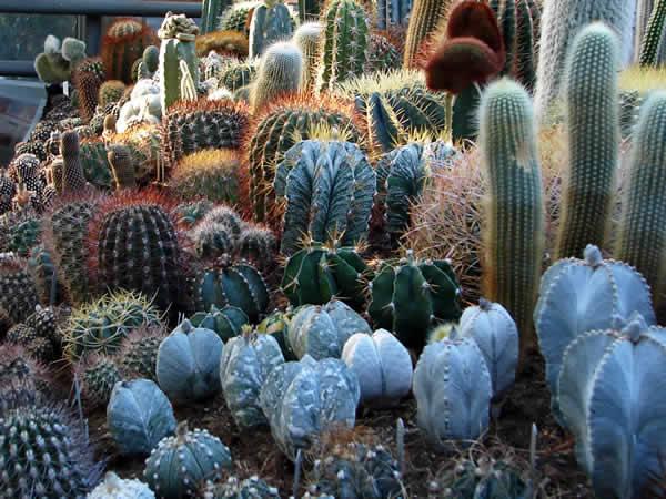 Jeszcze kaktusy