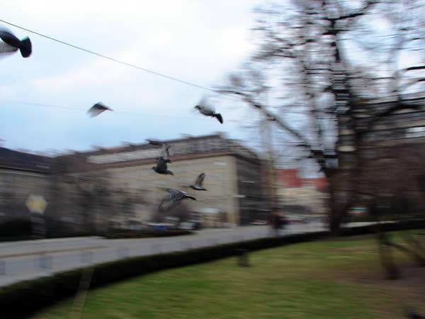 Ptaki Wrocław