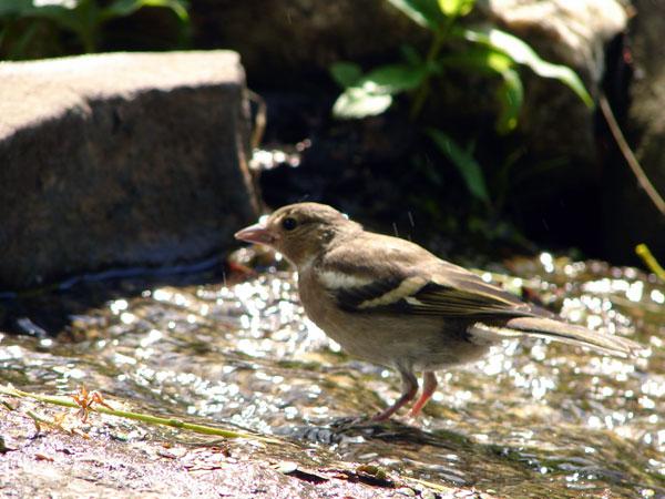 Ptaszek z bliska