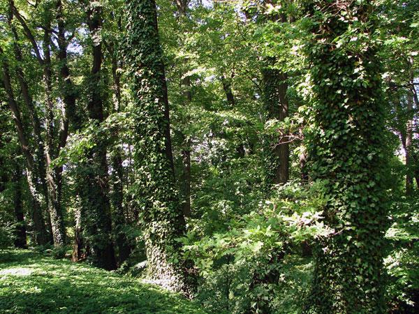 Bardzo zielono