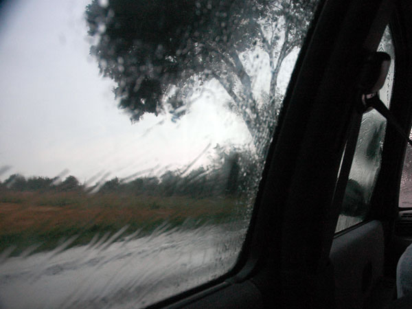 Drzewo i deszcz