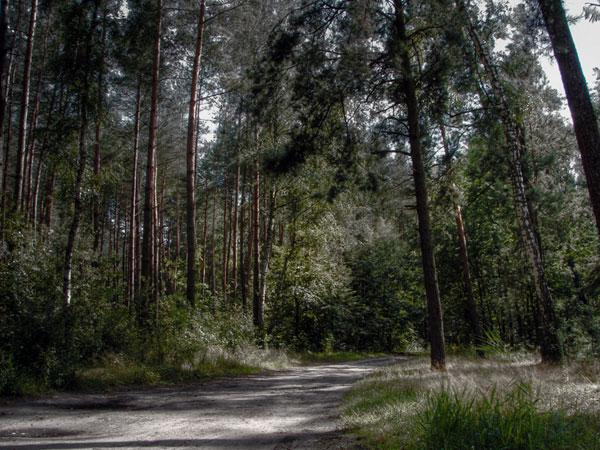 Zdjęcie - W lesie