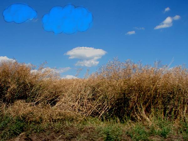 Zdjęcie - Powietrze się śmieje na niebiesko