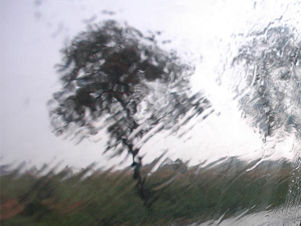 Rozmazanka drzewna