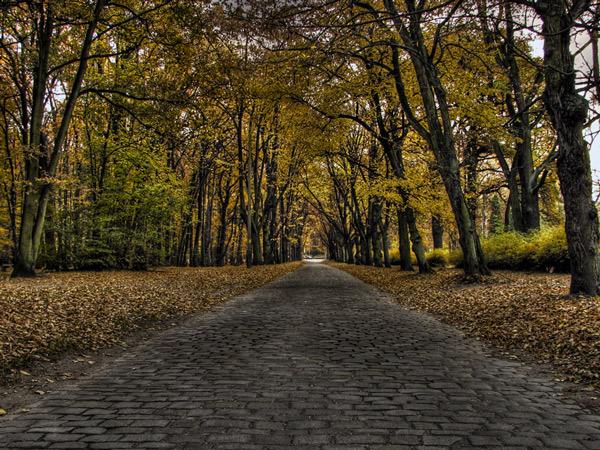 Jesienny HDRek