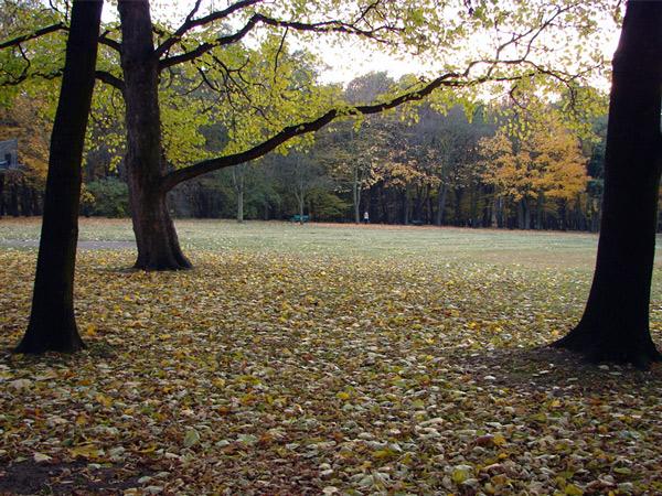 Zdjęcie - Jesień
