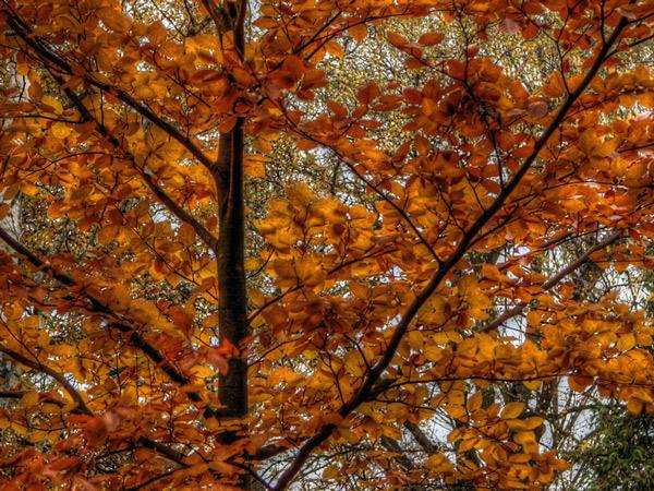 Zdjęcie - Jesienna deprecha