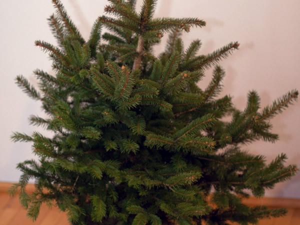 Przygotowania świąteczne