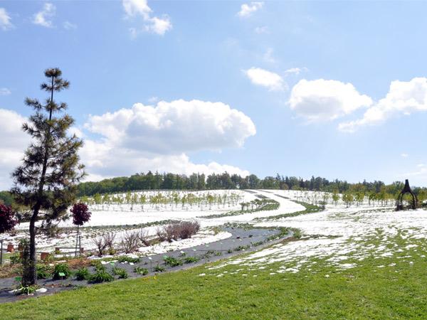 Piękną zimę mamy...