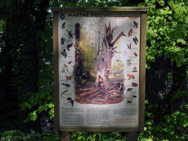 Zdjęcie - Martwe drzewo