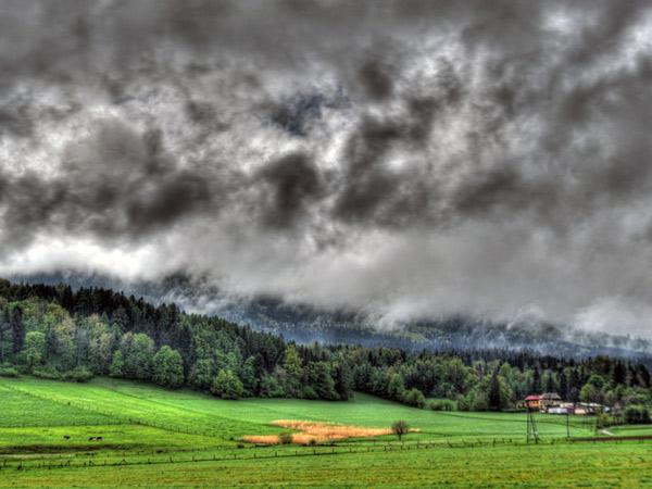 Zdjęcie - Gęsto