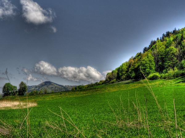 Zdjęcie - Cisownica