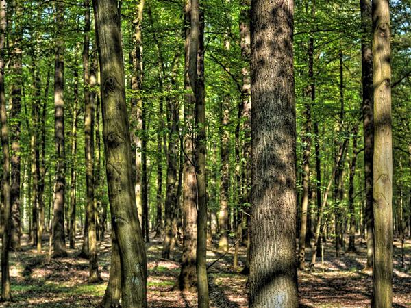 Zdjęcie - Drzewa