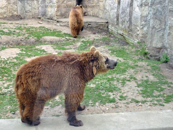Zdjęcie - Wrocławskie Zoo
