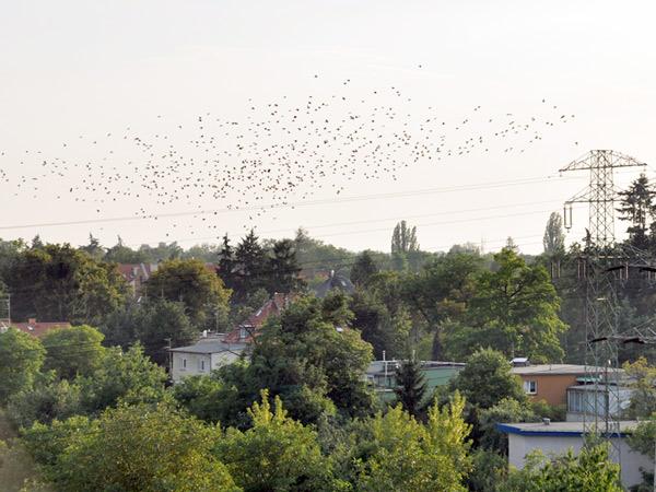 Zdjęcie - Wrocław