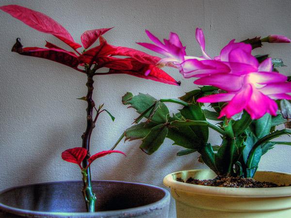 Zdjęcie - Kwiaty