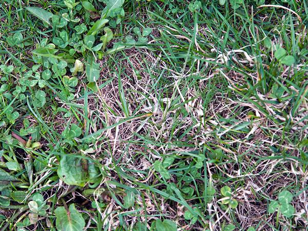 Co piszczy w trawie?