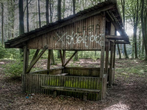 Zdjęcie - Trochę drogą, trochę lasem
