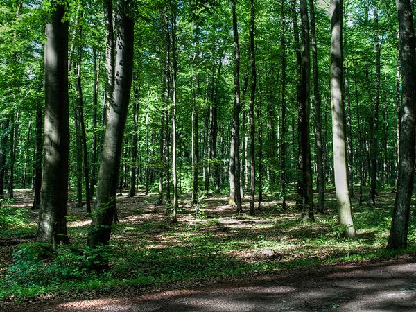 Trochę drogą, trochę lasem