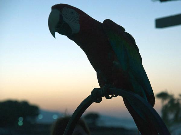 Zdjęcie - Nieruchoma