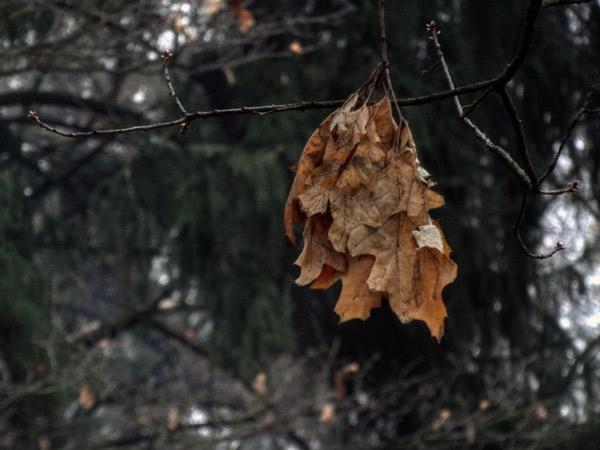 Zdjęcie - Listopad