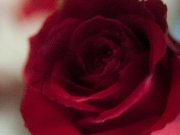 Ewentualnie róża