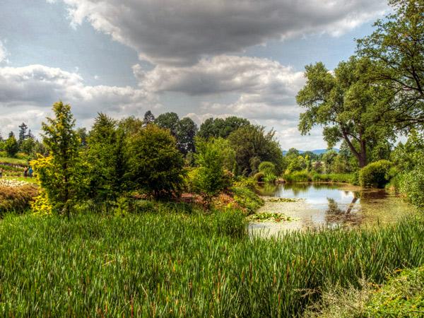 Zdjęcie - Arboretum