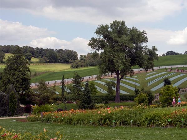 Arboretum, Wojsławice