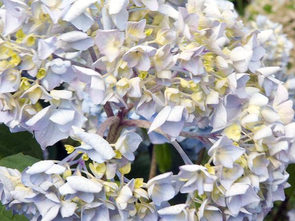 Kwiaty, dodano: 2013-7-13