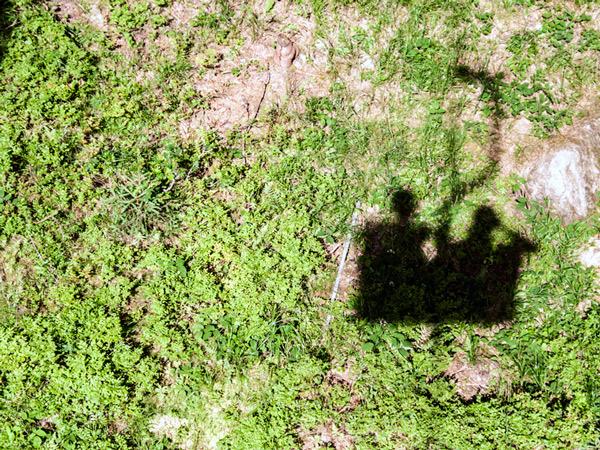 Zdjęcie - Mamy cień