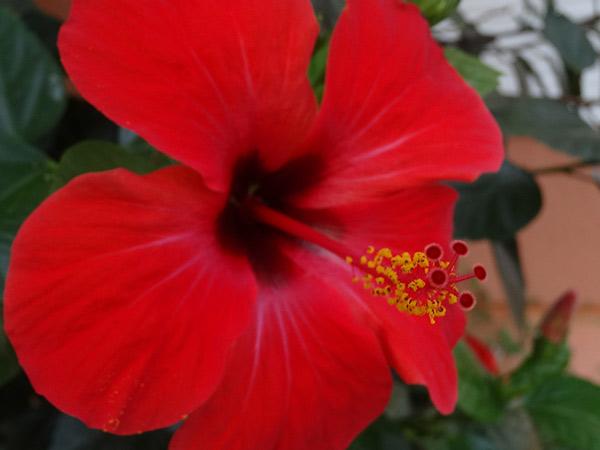 Zdjęcie - Kwiatek