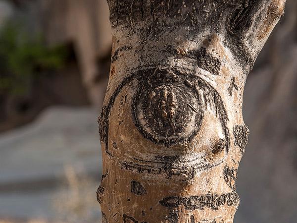 Drewniane oko