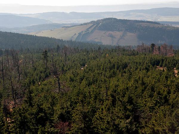 Zdjęcie - Lasy, lasy, lasy