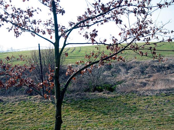 Zdjęcie - Szukając wiosny