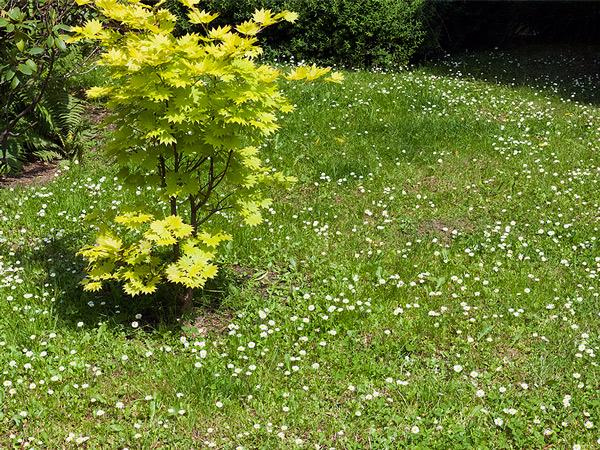 Zdjęcie - Ogród japoński