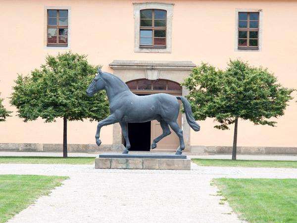 Zdjęcie - Koń