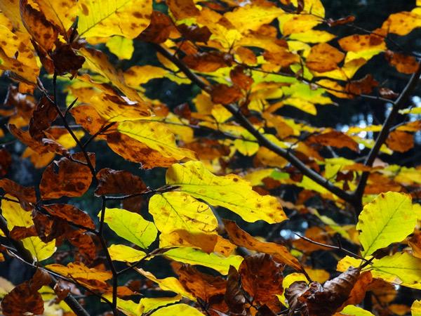 Zdjęcie - Jesiennie