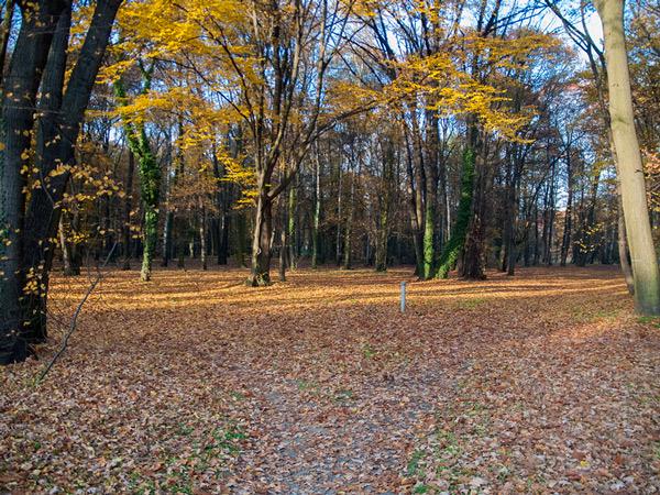 Spacer w parku