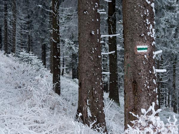 Zdjęcie - Zielony szlak