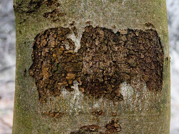 Na drzewie znak