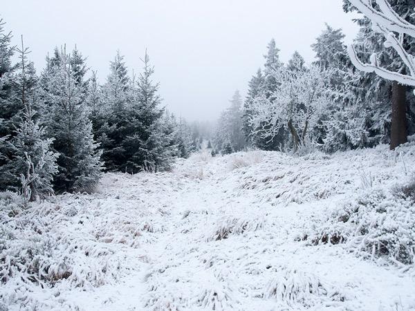 Zdjęcie - Biało