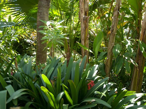 Zdjęcie - Ogród botaniczny Mar i Mutra