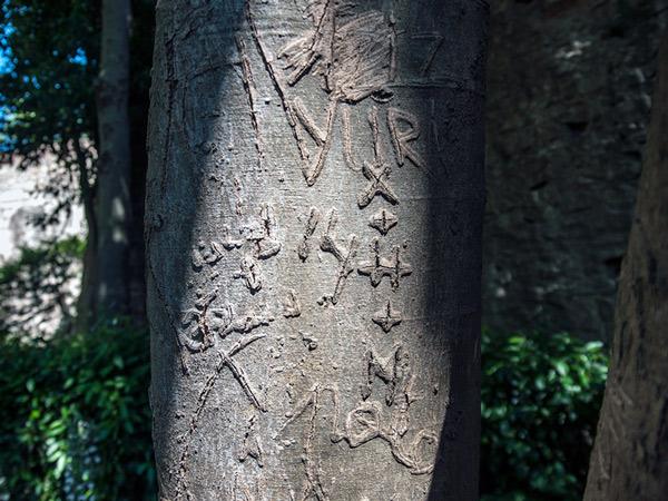 Drzewo pocięte